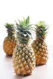 Ananas Frische Ananas Lizenzfreie Stockfotos