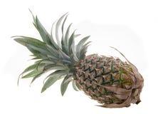 Ananas, frutta tropicale dell'ananas su fondo Fotografie Stock