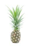 Ananas getrennt Lizenzfreie Stockfotos