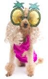 Ananas-Gläser und rosa Badeanzug Stockfotos
