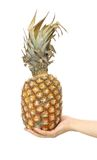 Ananas in hand. Tropical fruit ripe ananas in hand on white.isolated Stock Photos