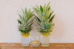 Ananas i cebulkowe młode rośliny r w szklanych słojach na nieociosanym drewnianym ściennym tle półki i stiuku obraz stock