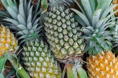 Ananas i marknad för ny frukt fotografering för bildbyråer