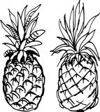 Ananas Illustration de vecteur Illustration Libre de Droits