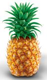 Ananas illustration, white back. Pineapple illustration in white background royalty free illustration