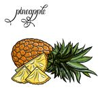 Ananas Illustrazione di vettore royalty illustrazione gratis