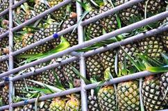 Ananas im Auto stockfotografie