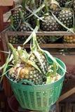 Ananas im Korb Stockfotografie