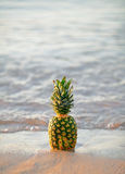 Ananas im Sand auf dem Strand Stockbild