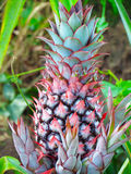 Ananas im Wald Stockfotografie