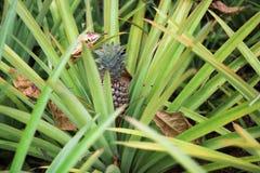 Ananas juteux et doux avec les feuilles vertes s'élevant dans un parterre dans un jardin botanique avec des plantes et des épices photographie stock libre de droits