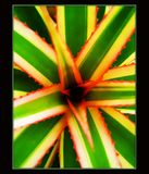Ananas leafs macro in canvas background royalty free stock images