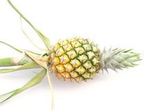 Ananas lokalisiert auf Weiß Stockfoto