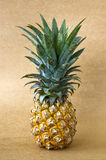 Ananas mûr Photo stock