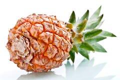 Ananas maturo isolato Fotografie Stock