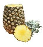 Ananas met gesneden die uiteinde op wit wordt geïsoleerd Royalty-vrije Stock Afbeelding