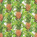 Ananas met groene bladeren tropische fruitteelt in een landbouwbedrijf De tellers naadloos patroon van de ananastekening op een w Royalty-vrije Stock Foto