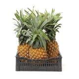 Ananas na bia?ym tle fotografia stock