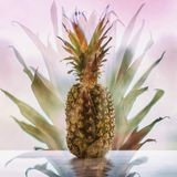 Ananas na drewnianym stole na abstrakt menchii tle, zwrotnika lata pojęcia symbol powitanie i gościnność, kopia zdjęcia royalty free
