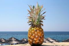 Ananas och exotisk strand Royaltyfria Bilder