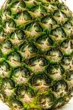 Ananas op witte achtergrond wordt geïsoleerd die De zomerfruit Royalty-vrije Stock Foto's