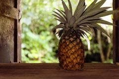 Ananas på trätabellen i landskök på bakgrund av det trädgårds- landet Arkivbild