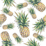 Ananas på en vitbakgrund Färgglad illustration för vattenfärg tropisk frukt seamless modell Royaltyfri Foto