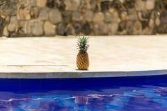 Ananas przy poolside obraz royalty free