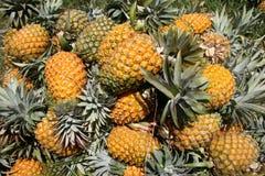 Ananas sélectionnés frais images stock