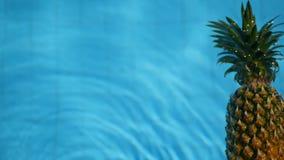 Ananas som svävar i blått vatten i simbassäng Sund rå organisk mat saftig frukt exotiskt tropiskt för bakgrund stock video