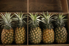 ananas sprzedaży zdjęcia royalty free