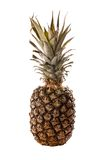 Ananas su bianco Fotografia Stock