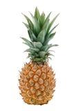 Ananas su priorità bassa bianca Fotografie Stock