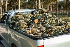 Ananas sul camion Immagine Stock Libera da Diritti