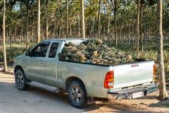Ananas sul camion Immagine Stock