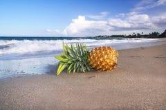 Ananas sulla spiaggia dell'oceano Fotografia Stock Libera da Diritti