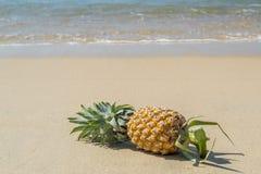 Ananas sulla spiaggia sabbiosa, Phuket Fotografia Stock Libera da Diritti