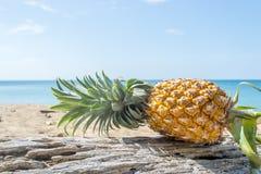 Ananas sur le bois Images libres de droits
