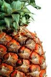 Ananas sur un blanc Image stock