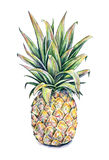 Ananas sur un fond blanc Illustration colorée d'aquarelle Fruit tropical Travail manuel Photo stock