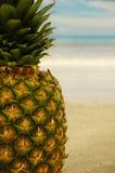 Ananas sur une plage exotique photo stock