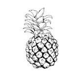 Ananas till söt frukt för svartvit elasticitet vektor illustrationer