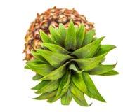 Ananas trägt IV Früchte Stockfotos