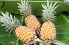 Ananas tre Arkivbilder