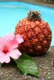Ananas und Blume Stockbild
