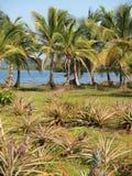Ananas und Kokosnussbäume Stockfotografie