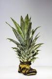 Ananas und Schuh Stockfotografie