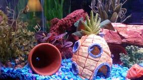 Ananas unter dem Meer Lizenzfreies Stockfoto