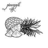 Ananas Vector illustratie Stock Afbeelding