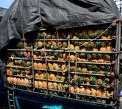 Ananas w ciężarówce Fotografia Royalty Free